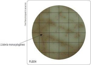 Фото HiMedia FL024-50РТ Бакпечатки HiTouch для выделения листерий (50 чашек d 55 мм)