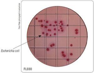 Фото HiMedia FL030-50РТ Бакпечатки HiTouch для дифференц. колиформ.бактер. и др.энтеропато (50 чашек d 55 мм)