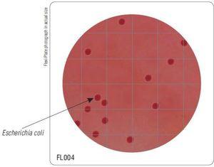 Фото HiMedia FL004-50РТ Бакпечатки HiTouch для обнаруж.следовых кол-в колиформ. микроорг. (50 чашек d 55 мм)