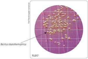 Фото HiMedia FL017-50РТ Бакпечатки HiTouch для обнаружения термофильных бацилл (50 чашек d 55 мм)