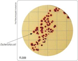 Фото HiMedia FL009-50РТ Бакпечатки HiTouch для подсчета бактерий в окружающей среде (50 чашек d 55 мм)