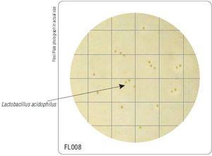 Фото HiMedia FL008-50РТ Бакпечатки HiTouch для подсчета кисломолочных бактерий (50 чашек d 55 мм)