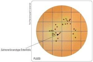 Фото HiMedia FL023-50РТ Бакпечатки HiTouch для селектив. выделения и идентиф. сальмонелл (50 чашек d 55 мм)